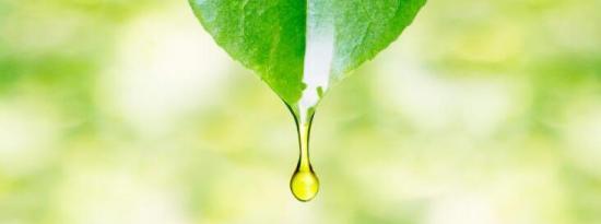 留兰香精油的10个令人印象深刻的健康益处