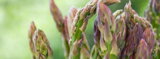家庭园艺基础知识:如何种植芦笋