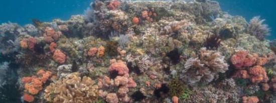 一个可能存在超级珊瑚的区域被发掘