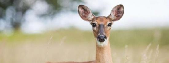 了解野生动物的病原体耐受性是大流行准备的关键