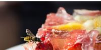 如何让黄蜂远离你的食物和甲板